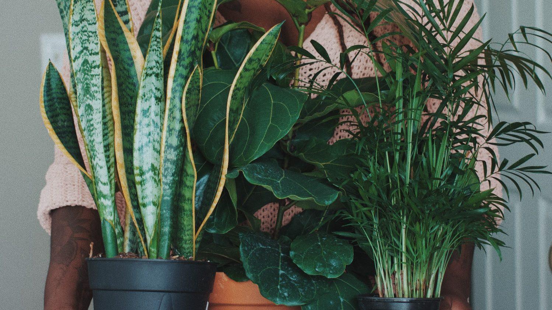 Voordelen van goed verzorgen van huiskamerplanten