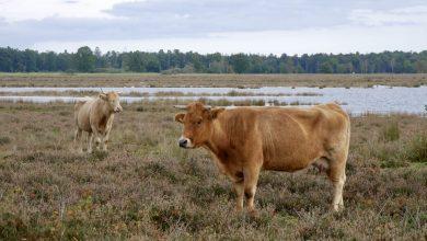 mooiste natuurgebieden in Drenthe