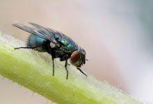 Zo kom je af van irritante vliegen bij het eten